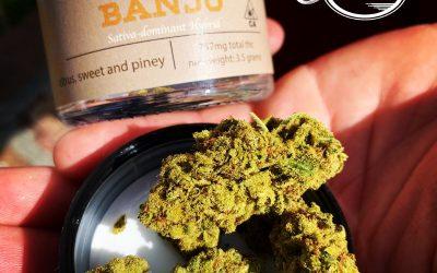 Banjo By Coastal Sun Strain Review