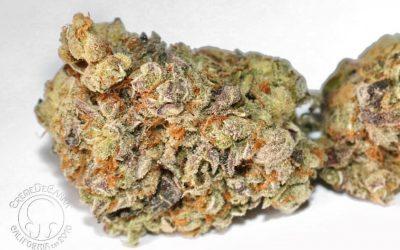 Sour Kush Cannabis Strain Review